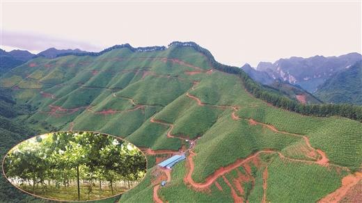 凤山县:广开门路发展壮大村级集体经济