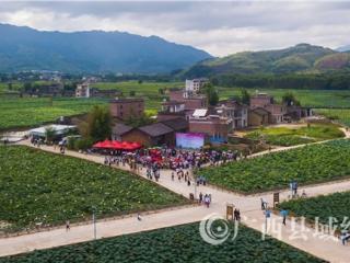 平桂区:6000亩荷塘的荷花正陆续盛放 吸引众多游客前来观赏采风