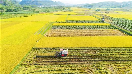 """象州县:打造全区""""农产品主产区""""  沃野千里地生金"""