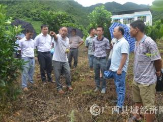 凌云县:沙里瑶族乡人大代表到逻楼镇调研产业兴旺工作