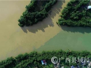 """融安县:珠江上游融江今年第三次出现""""泾渭分明"""""""