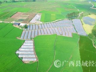 """平桂区:""""五聚力五提升""""推进现代特色农业示范区创建工作再上新台阶"""