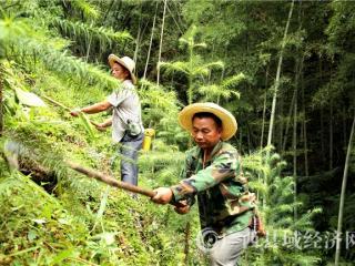 融安县:香杉生态产业旺