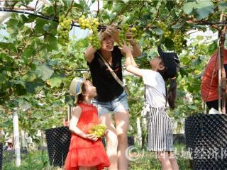 东兰县:葡萄飘香迎客来
