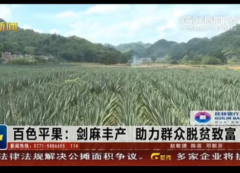 平果县:剑麻丰产 助力群众脱贫致富