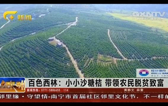 西林县:小小沙糖桔 带领农民脱贫致富