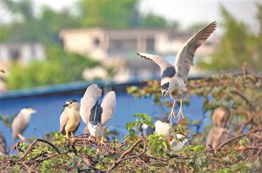 象州县:马坪镇古德村人与自然和谐共处