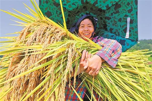 三江侗族自治县:两万余亩早稻迎来收割季