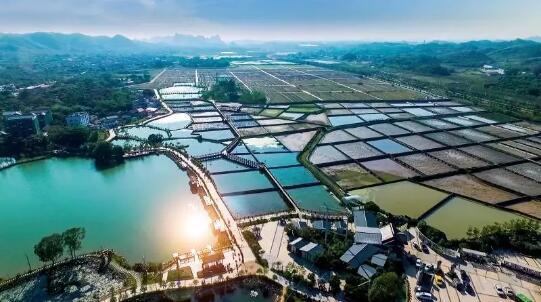 容县、田东获2018年国家农业项目财政补助资金1500万元