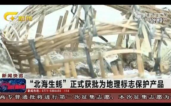 """""""北海生蚝""""正式获批为地理标志保护产品"""