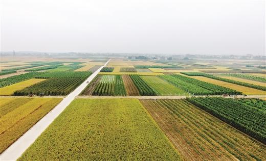 广西整县推进土地整治全国领先