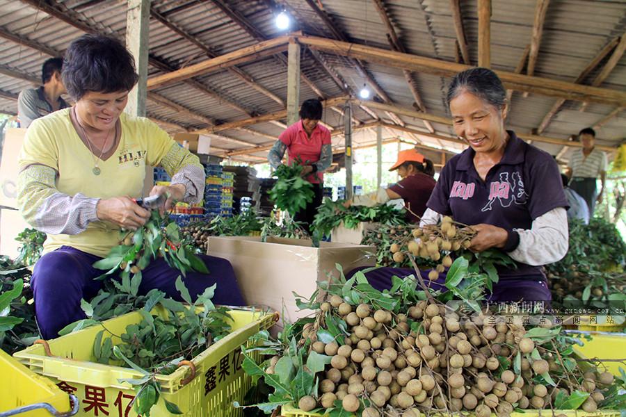 上半年广西口岸水果进出口大增 进出口鲜干水果及坚果累计66.7万吨