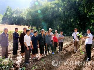 南丹县:引进鲜食型红薯产业 助农增收促脱贫