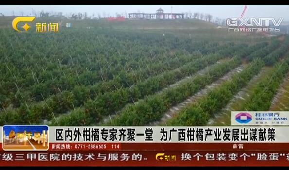 区内外柑橘专家齐聚一堂 为广西柑橘产业发展出谋献策