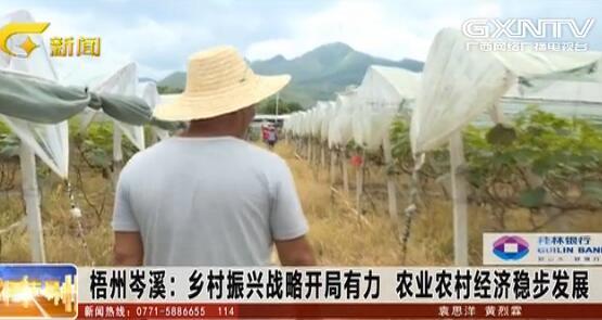 岑溪市:乡村振兴战略开局有力 农业农村经济稳步发展