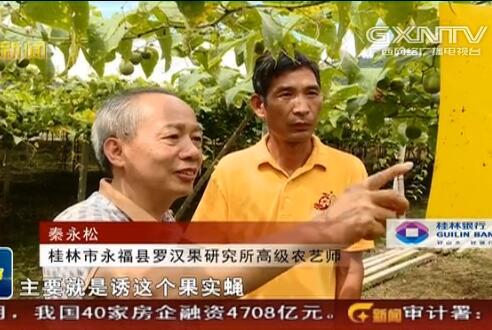 永福县:推广标准化种植 促罗汉果产业提质增产
