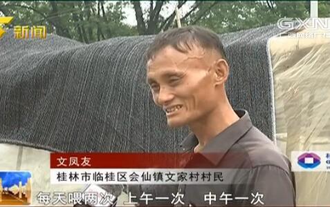 临桂区:养殖小蚂蚱 脱贫有盼头