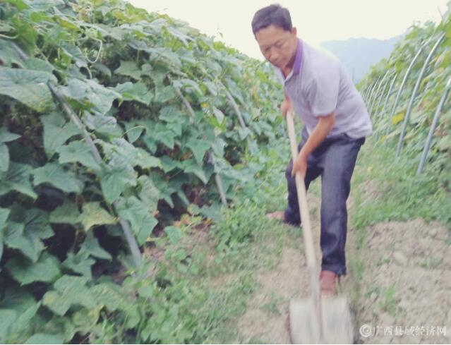 乐业县陆朝新:情系下六 带民致富