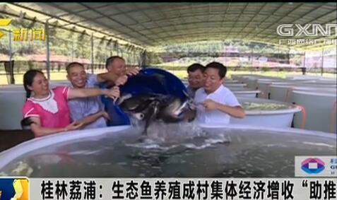"""荔浦县:生态鱼养殖成村集体经济增收助推器"""""""