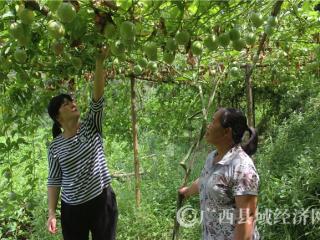 岑溪市莫凤:一个女强人  益一方百姓