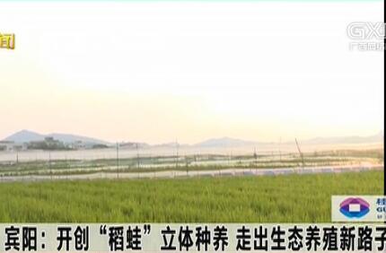 """宾阳古辣镇:开创""""稻蛙""""立体种养 走出生态养殖新路子"""