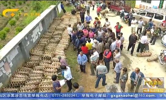 藤县:安排1200多万元支持贫困户发展产业
