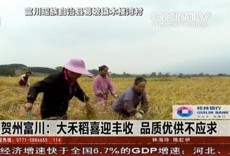 富川:大禾稻喜迎丰收 品质优供不应求