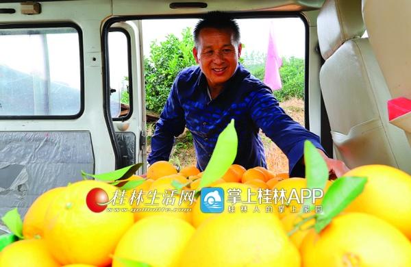 荔浦县:种植新品种蜂蜜橙  致富果已经远销东三省