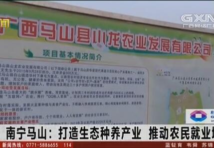 马山县:打造生态种养产业 推动农民就业增收