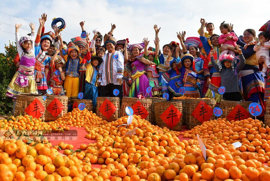 柳城县:举办生态蜜桔擂台赛 群众欢乐庆丰收