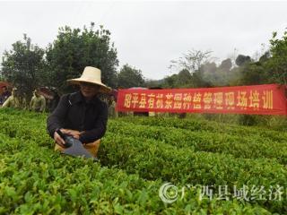 昭平县:提高农业机械化水平 促进茶叶增产农民增收