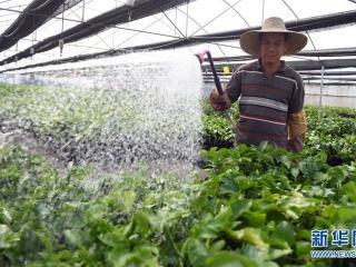 钦南区:发展水果种植 助力脱贫攻坚
