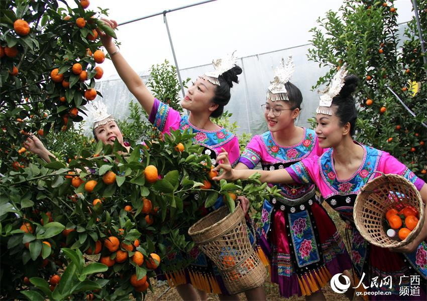 荔浦芋、荔浦马蹄、荔浦砂糖桔规模化种植促进产业兴旅游旺