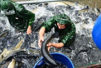 右江区:改革开放40年 水产畜牧业成就辉煌
