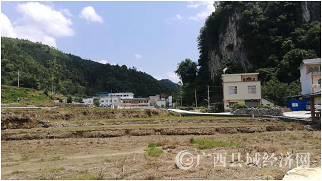 乐业县周秀义:一个步履稳健的农村产业致富带头人