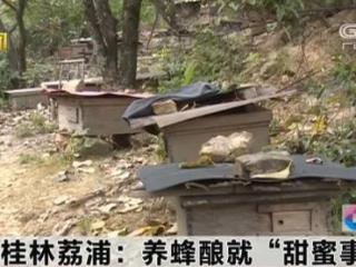 """荔浦市:养蜂酿就""""甜蜜事业"""""""
