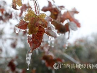融安县德胜峰:冰凌景观引客来