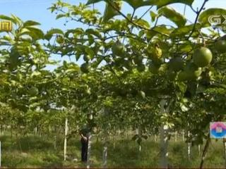 贺州:畅通农产品销路 激活农民种地热情