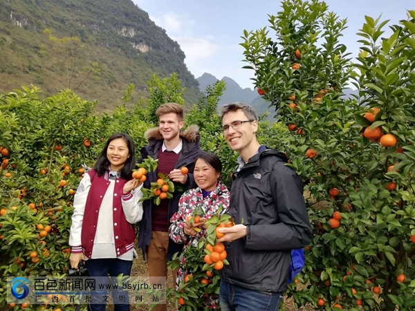 田阳县坡洪镇:砂糖橘喜获丰收,引来一批外国友人