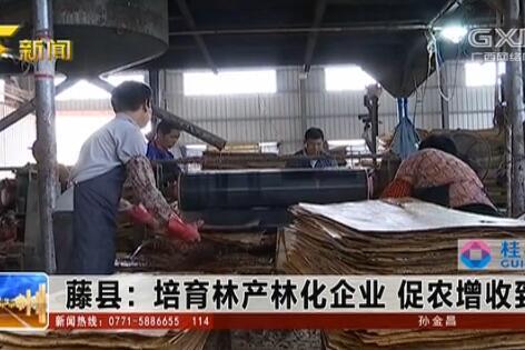 藤县:培育林产林化企业 促农增收致富