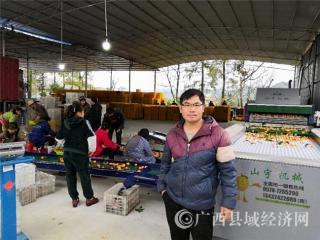 平果县潘佳华:大学生创业带动农民增收致富