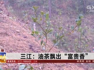 """三江县:油茶飘出""""富贵香"""""""