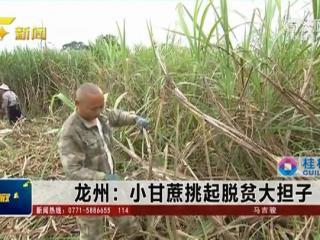 龙州县:小甘蔗挑起脱贫大担子