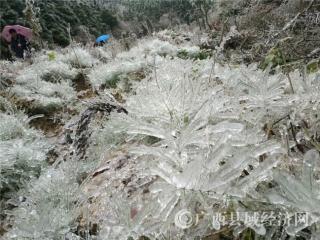 乐业县:乡村冰雪风景美