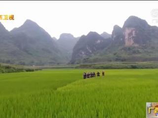 大化县:打造全国康养美食旅游目的地