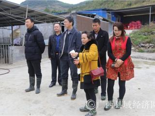 """环江县覃素鲜:""""巾帼脱贫""""在行动 女企业家艰苦创业带动村民致富"""