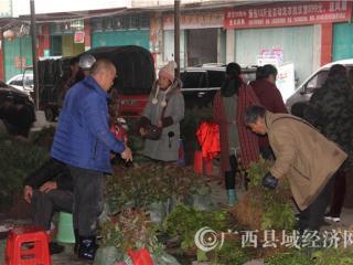 环江县:人勤春早 节后苗木市场火热