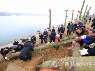 融安县:融江边植新绿