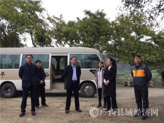 平果县委黄志愿书记到四塘镇视察工作