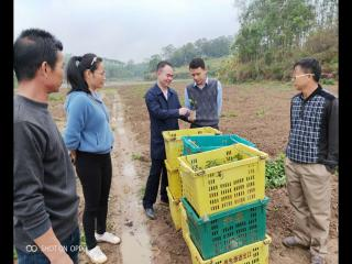 浦北县安石镇:引导发展百香果产业 助推群众发展致富